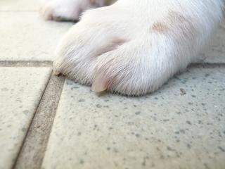 犬の爪切りが苦手な方は、爪ヤスリがオススメです!   愛犬家が集まる「トロモロ」